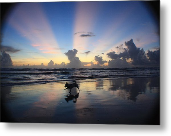 All Dogs Go To Heaven  Metal Print