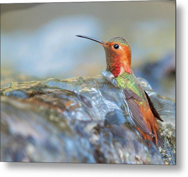 Allen's Hummingbird Taking A Bath On A Waterfall Metal Print
