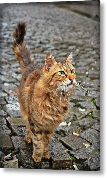 Alley Cat Metal Print