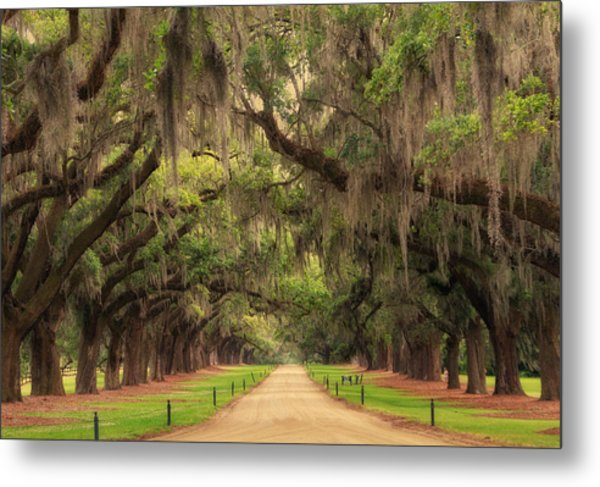 Alley Of The Oaks Metal Print