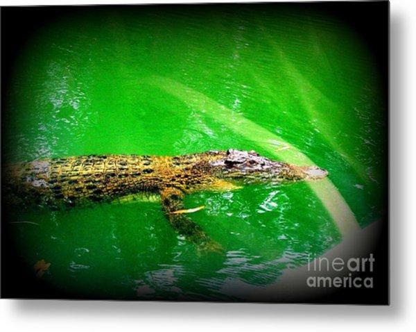 Alligator In Australia Metal Print by John Potts