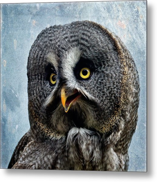 Allocco Della Lapponia - Tawny Owl Of Lapland Metal Print