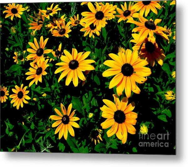 Sunflower Allure Metal Print