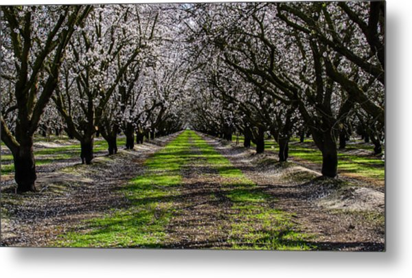 Almond Grove Metal Print