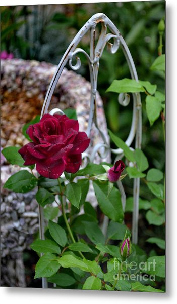 Almost A Perfect Rose Metal Print