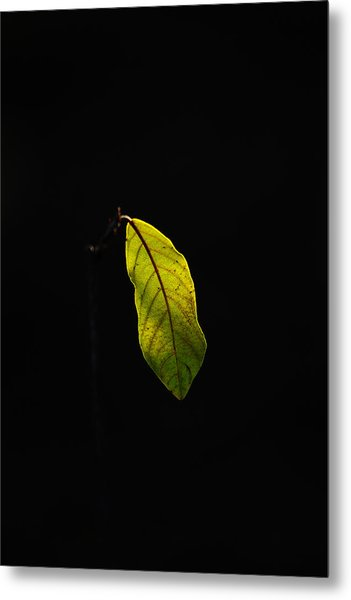 Alone In The Forest Metal Print by James Hammen
