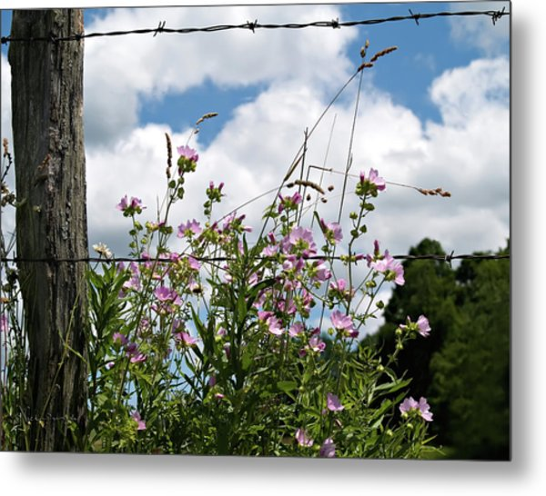 Along The Fence Metal Print