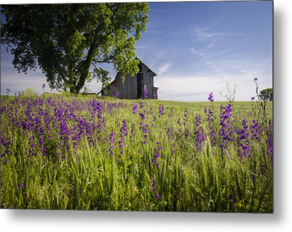 Along The Roadside Metal Print
