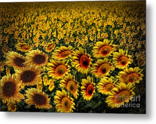 Along With The Wind Metal Print