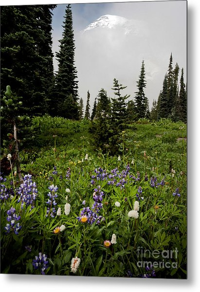 Alpine Beauty Metal Print