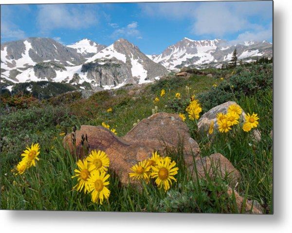 Alpine Sunflower Mountain Landscape Metal Print