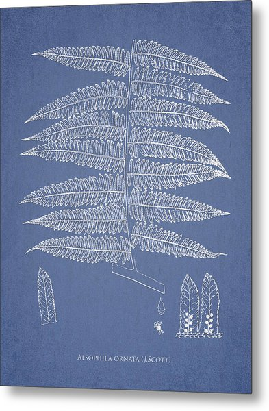 Alsophila Ornata Metal Print