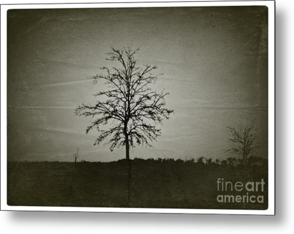 Am Trees - No.226 Metal Print