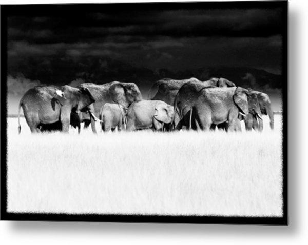 Amboseli Herd With Egret Metal Print