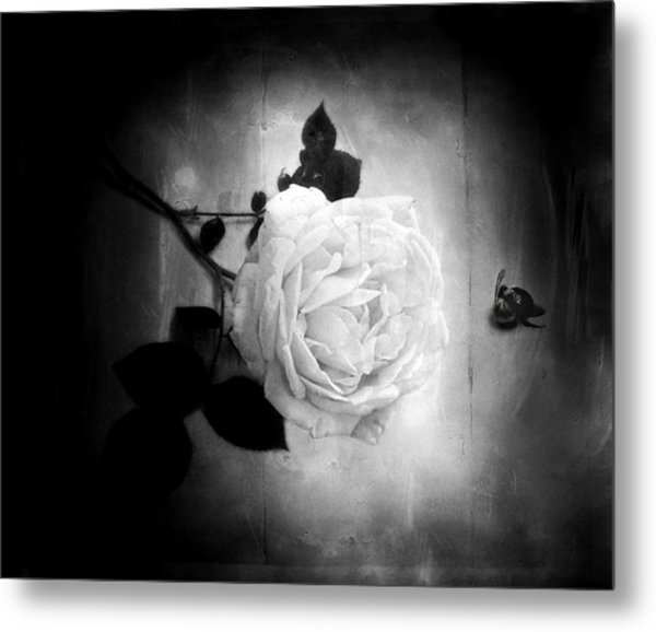 Ambridge English Rose Metal Print