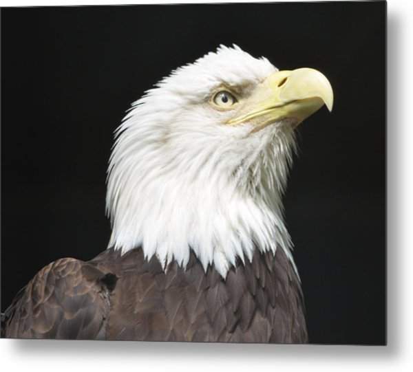 American Bald Eagle Profile Metal Print