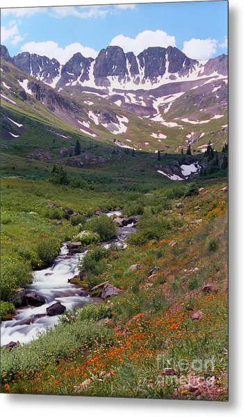 American Basin Wildflowers Metal Print