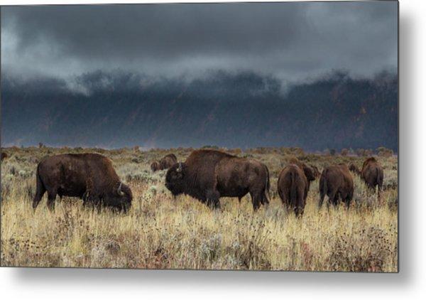 American Bison On The Prairie Metal Print