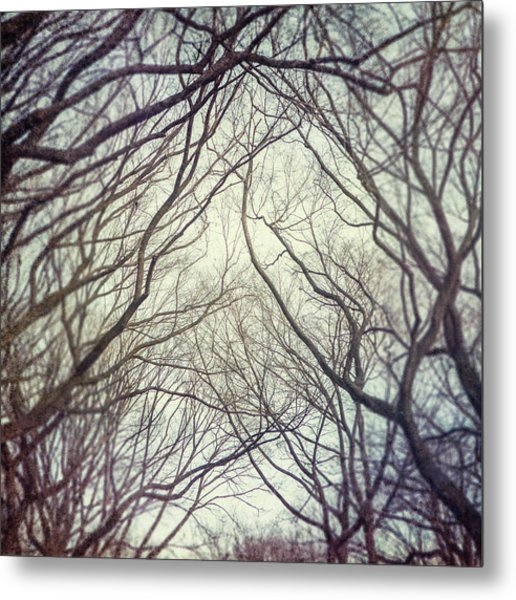American Elm Trees Of Central Park In New York City In Winter Metal Print by Lisa Russo
