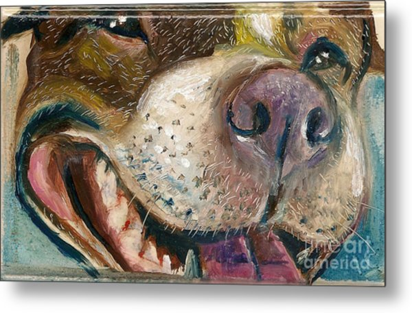 American Pit Metal Print by Donna Chaasadah