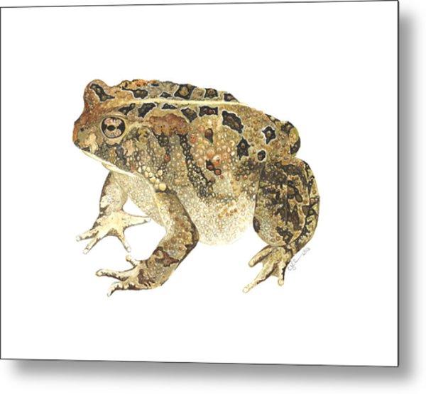 American Toad Metal Print