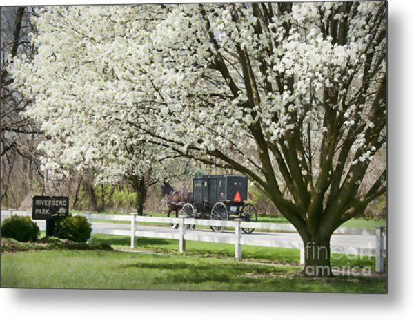 Amish Buggy Fowering Tree Metal Print