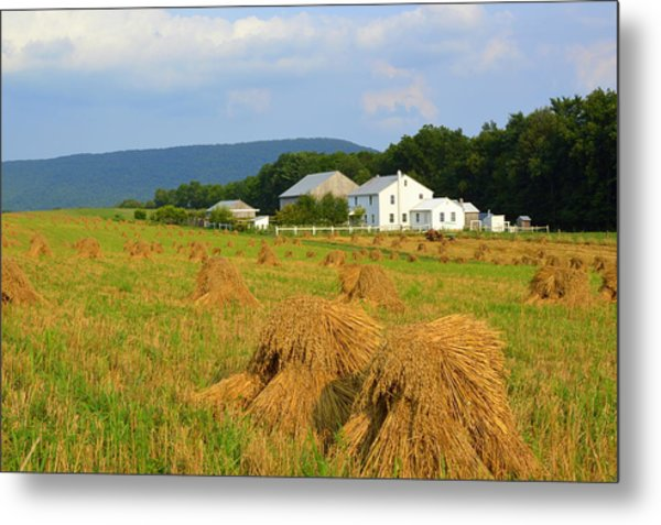 Amish Harvest #1 - Milroy Pa Metal Print