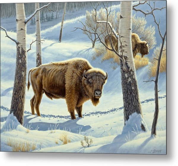 Among The Aspens- Buffalo Metal Print