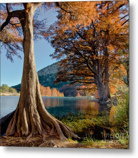 Among The Cypress Trees Metal Print