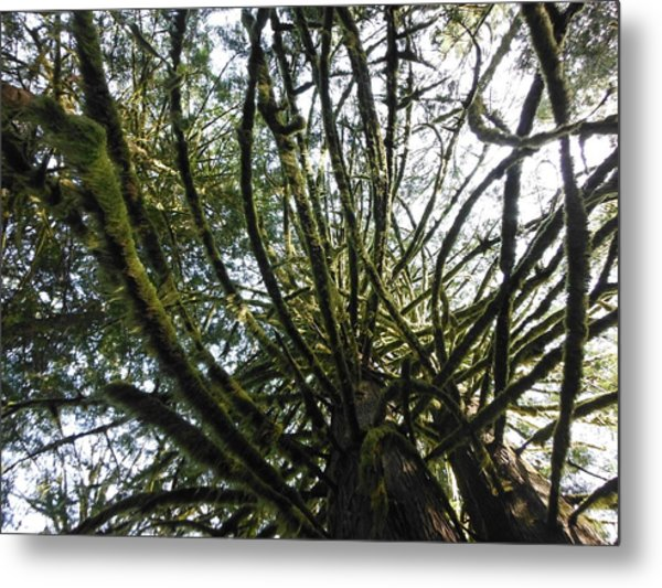Amongst The Branches Metal Print by Lori Thompson