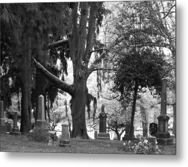 Amongst The Trees Metal Print