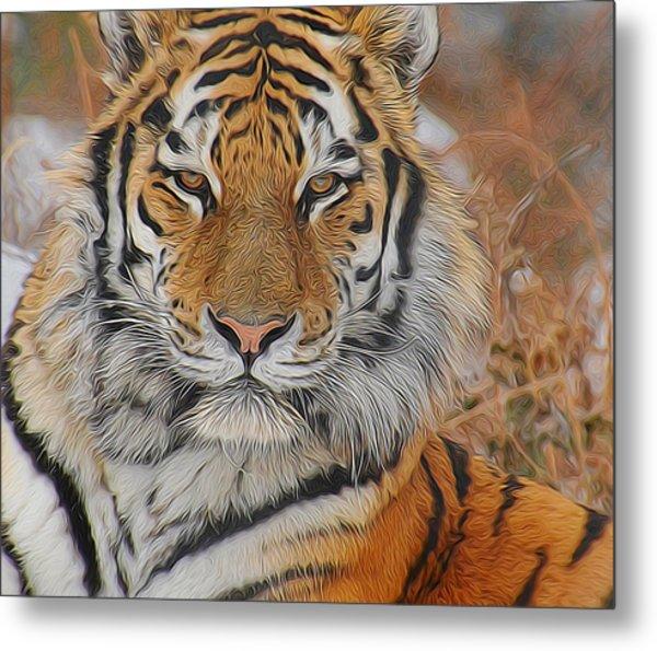 Amur Tiger Magnificence Metal Print