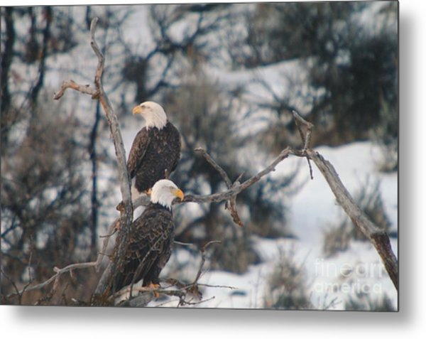 An Eagle Pair  Metal Print