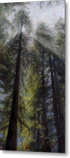 An Enchanted Forest Metal Print by Mary Giacomini