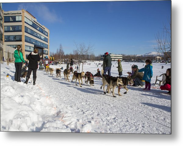 An Iditarod Racer In Anchorage Metal Print by Tim Grams