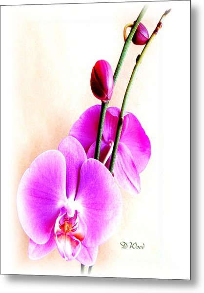 An Orchid For You Metal Print by Doris Wood