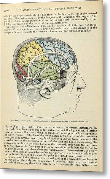 Anatomy Human Body Old Anatomical 126 Metal Print
