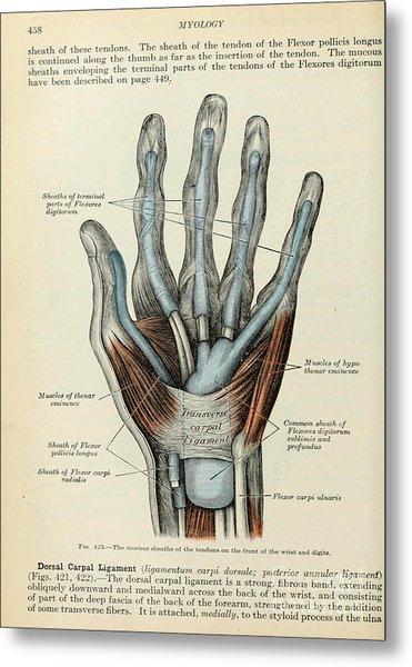 Anatomy Human Body Old Anatomical 83 Metal Print