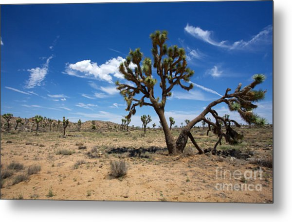 Ancient Joshua Tree Metal Print