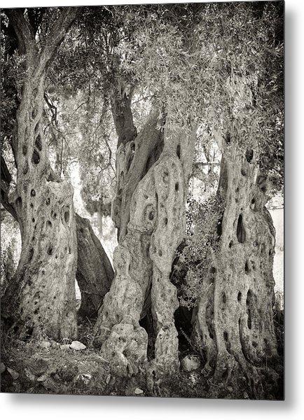 Ancient Olive Metal Print
