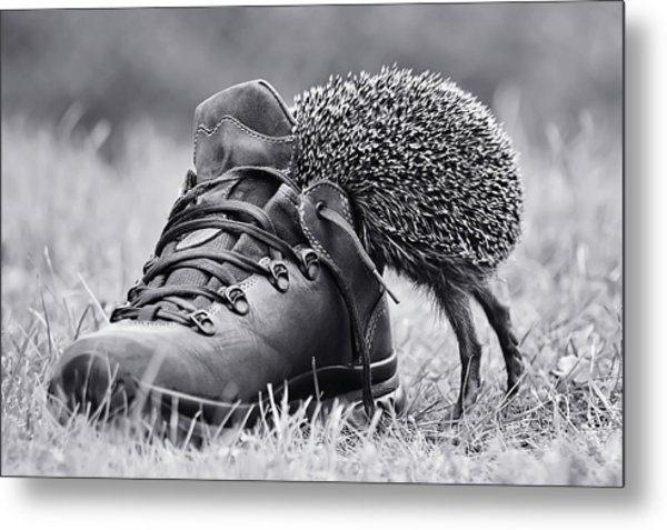 And Suddenly It's My Size? Metal Print by Elena Solovieva