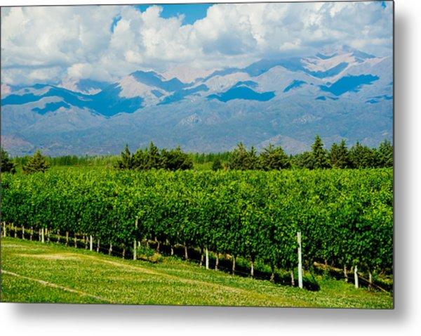 Andes Vineyard Metal Print