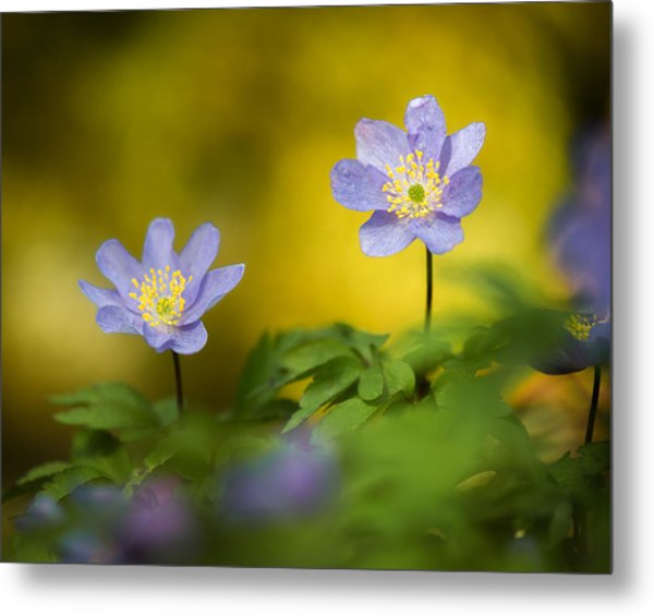 Anemone Beauty Metal Print