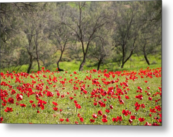 At Ruchama Forest Israel Metal Print