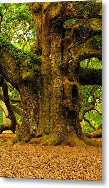 Angel Live Oak Trunk Metal Print