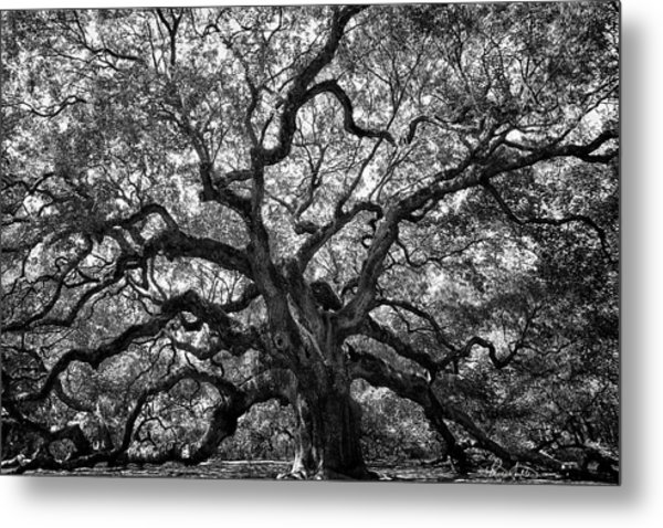 Angel Oak Metal Print