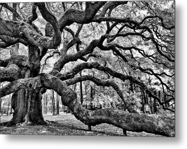 Angel Oak Tree Ir Hdr Metal Print