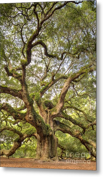 Angel Oak Tree Johns Island Sc Metal Print