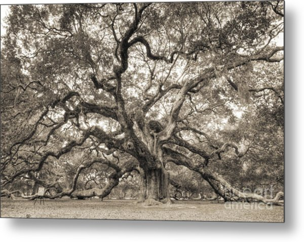 Angel Oak Tree Of Life Sepia Metal Print