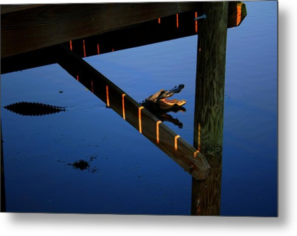Angry Gator Metal Print by Miles Stites